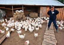 Мужская колония поселения для первоходов владимирской области